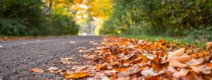 stay-safe-this-autumn-with-these-fall-driving-tips_b